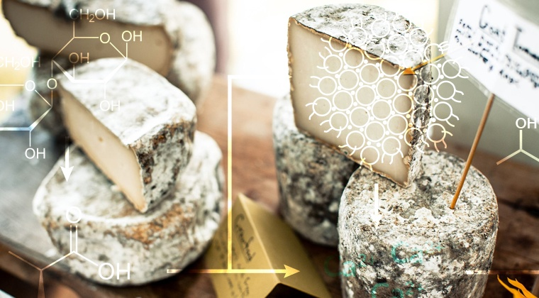 Microbes 101 - Cheese Science Toolkit