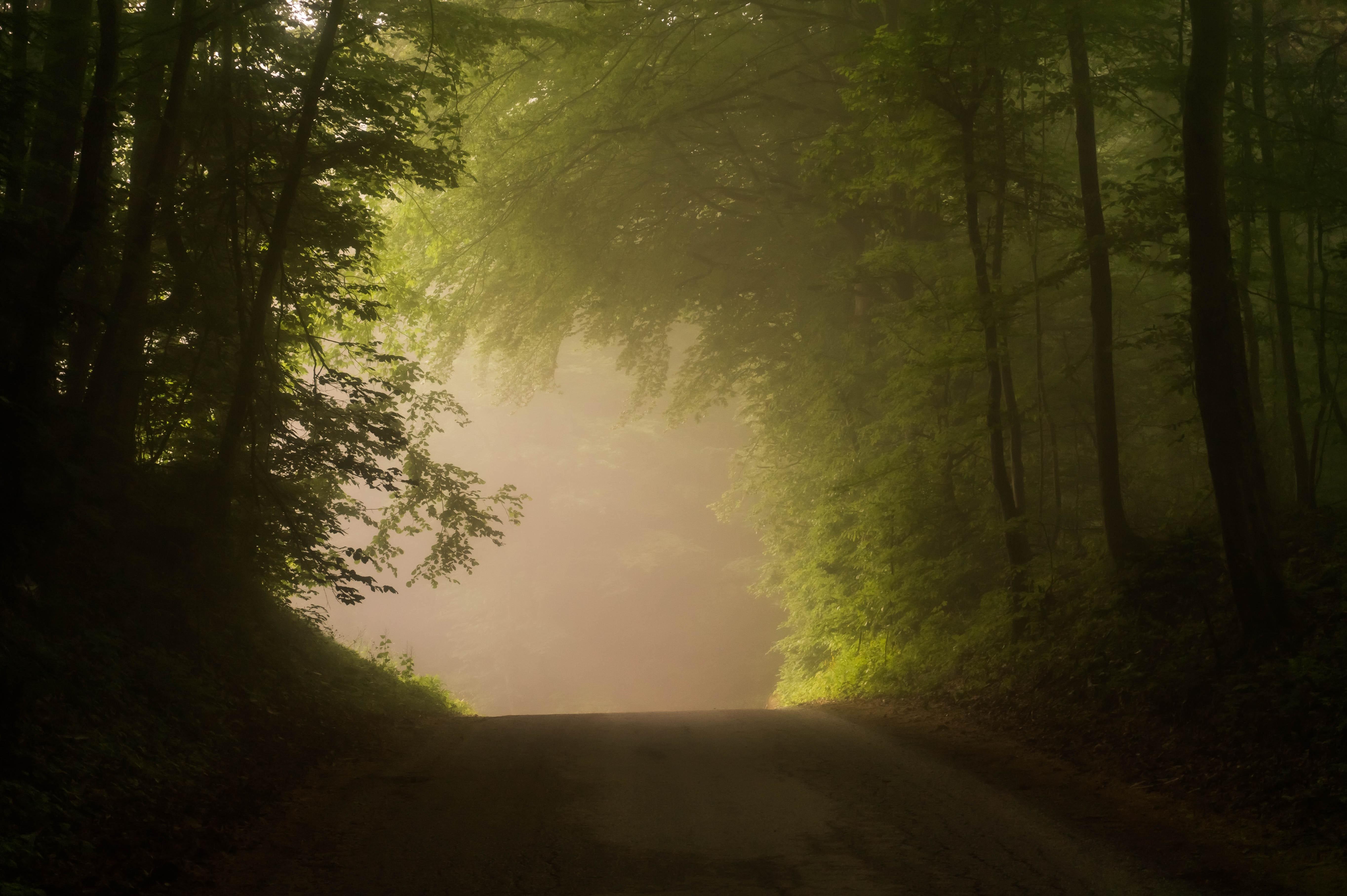 певица поделилась вертикальное фото туманной тропинки азы актерского