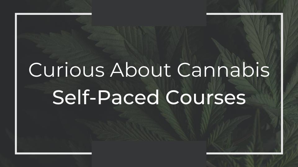 Curious About Cannabis Self-Paced Courses
