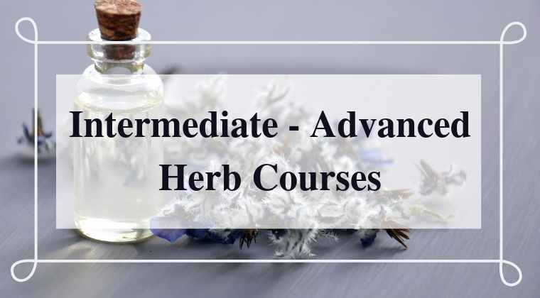 Intermediate-Advanced Herb Courses