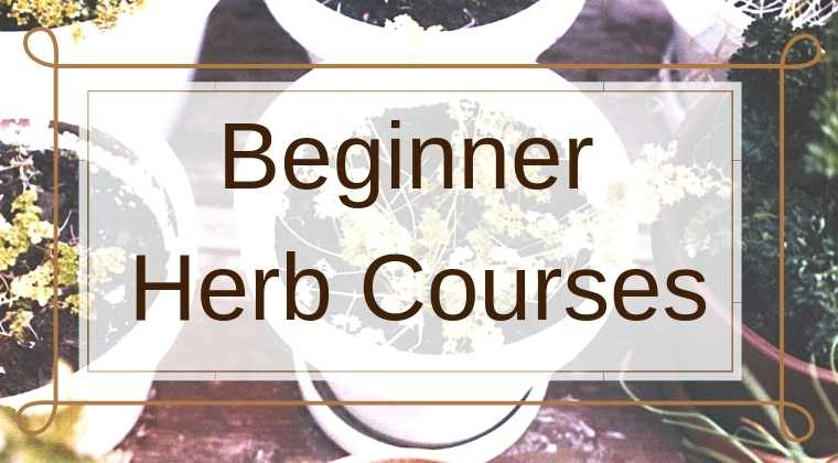 Beginner Herb Courses