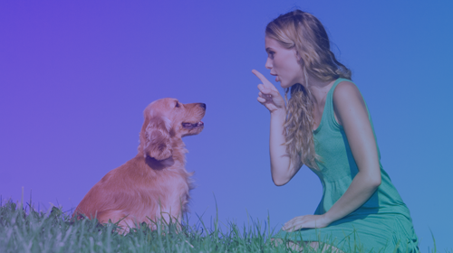 The Easiest, Quickest, Most Effective & Enjoyable Way to Train Your Puppy/Dog