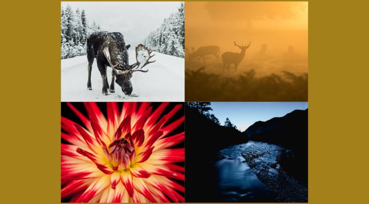 Soul Circle: Winter, Lente, Zomer, Herfst